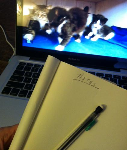A pencil and notebook ready to take notes; a laptop screen playing a video of kittens.
